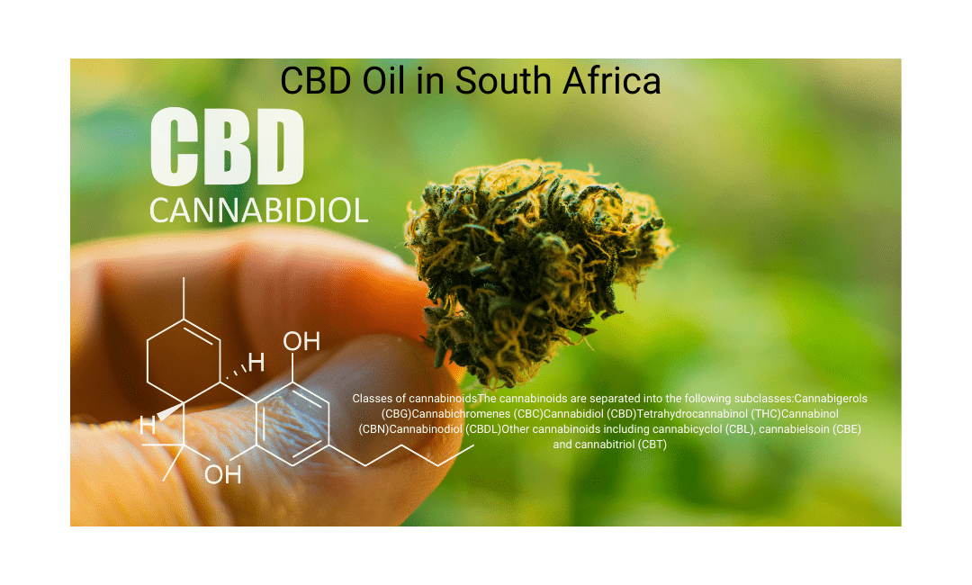 Cannabis Oil Uses in South Africa