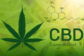 The Role of Cannabis Oil in Treating Cancer